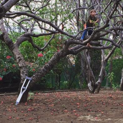Mason up a tree :)